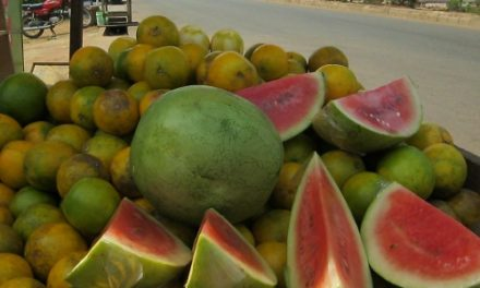 How to Plant, Harvest and Market Watermelon in Nigeria
