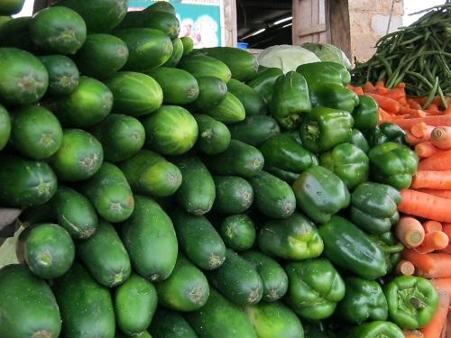 Make money growing cucumbers